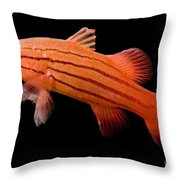 Peppermint Basslet Throw Pillow