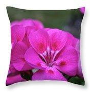 Pepto Pink Throw Pillow