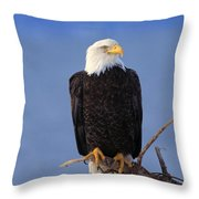 Perched Bald Eagle Throw Pillow by Natural Selection David Ponton