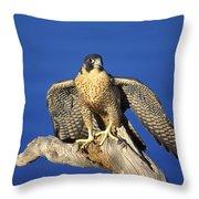 Peregrine Falcon On Perch Throw Pillow