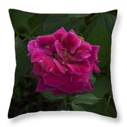Perfect Red Rose Throw Pillow