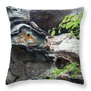 Petrified Prehistoric Monster In Arkansas Throw Pillow by Douglas Barnett