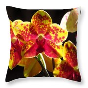 Phalaenopsis Orchids Throw Pillow
