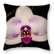 Phalaenopsis White Orchid Throw Pillow