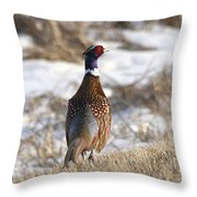 Pheasant In The Winter Throw Pillow