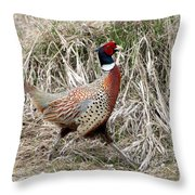 Pheasant Walking Throw Pillow