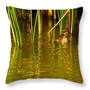 Pied-billed Grebe Near The Reeds Throw Pillow