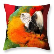 Pietro The Parrot Throw Pillow