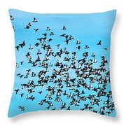 Pigeon Flight Throw Pillow