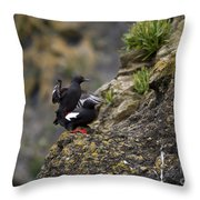 Pigeon Gillemot Mating Throw Pillow