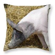 Piggy Piggy In The Straw Throw Pillow