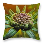 Pinchshin Bud Throw Pillow