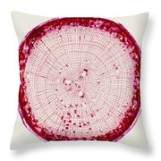 Pine Root Section Throw Pillow