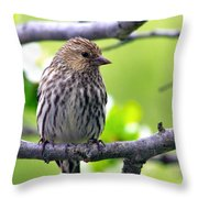 Pine Siskin Finch Baby Throw Pillow