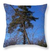 Pine Tree Standing Tall Throw Pillow