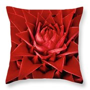 Pingwing Bromeliad Aechmea Magdalenae Throw Pillow