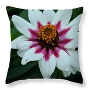 Pink And White Throw Pillow