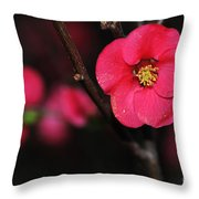 Pink Blossom In The Evening Throw Pillow