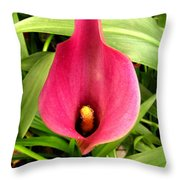 Pink Calla Lily Throw Pillow
