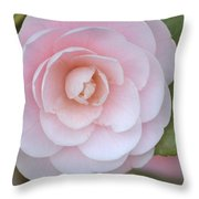Pink Camellia Flower In Spring Throw Pillow