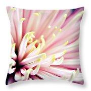 Pink Chrysanthemum Throw Pillow