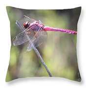 Pink Dragonfly In The Marsh Throw Pillow