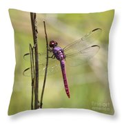 Pink Dragonfly With Sparkly Wings Throw Pillow