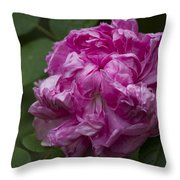 Pink English Rose Throw Pillow