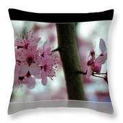 Pink Flowering Tree In Spring Framed Throw Pillow
