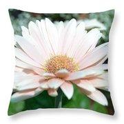 Pink Gerbera Flower Throw Pillow