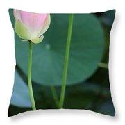 Pink Lotus Buds Throw Pillow