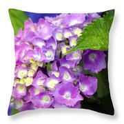 Pink Mophead Hydrangea Throw Pillow