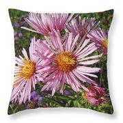 Pink New York Aster- Symphyotrichum Novi-belgii Throw Pillow