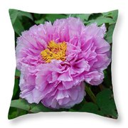 Pink Peony Flowers Series 9 Throw Pillow