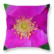 Pink Portulaca Throw Pillow