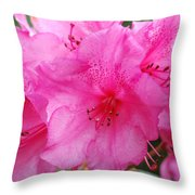 Pink Rhody Throw Pillow