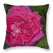 Pink Rose Wendy Cussons With Raindrops Throw Pillow