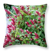 Pink Shrimp Plant Throw Pillow
