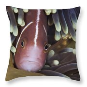 Pink Skunk Clownfish In Its Host Throw Pillow