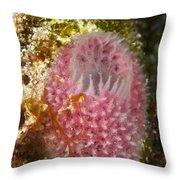 Pink Sponge Throw Pillow