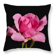 Pink Tea Rose Throw Pillow