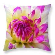 Pink Tinged Dahlia Throw Pillow