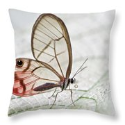 Pink-tipped Clearwing Satyr Cithaerias Throw Pillow