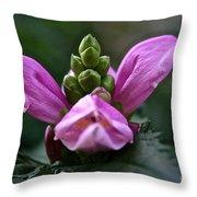 Pink Turtlehead Throw Pillow
