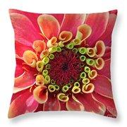 Pink Zinnia Macro Throw Pillow