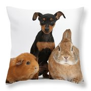 Pinscher Puppy With Rabbit And Guinea Throw Pillow