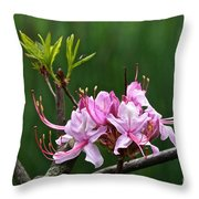 Pinxterbloom Azalea  Throw Pillow