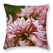 Pinxterflower Azalea Throw Pillow