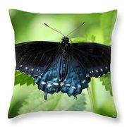Pipevine Swallowtail Throw Pillow