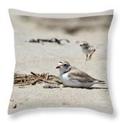 Piping Plover Mom And Two Babies Throw Pillow